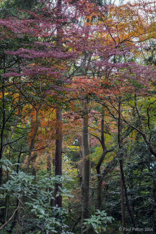 Autumn trees, Yoyogi Park