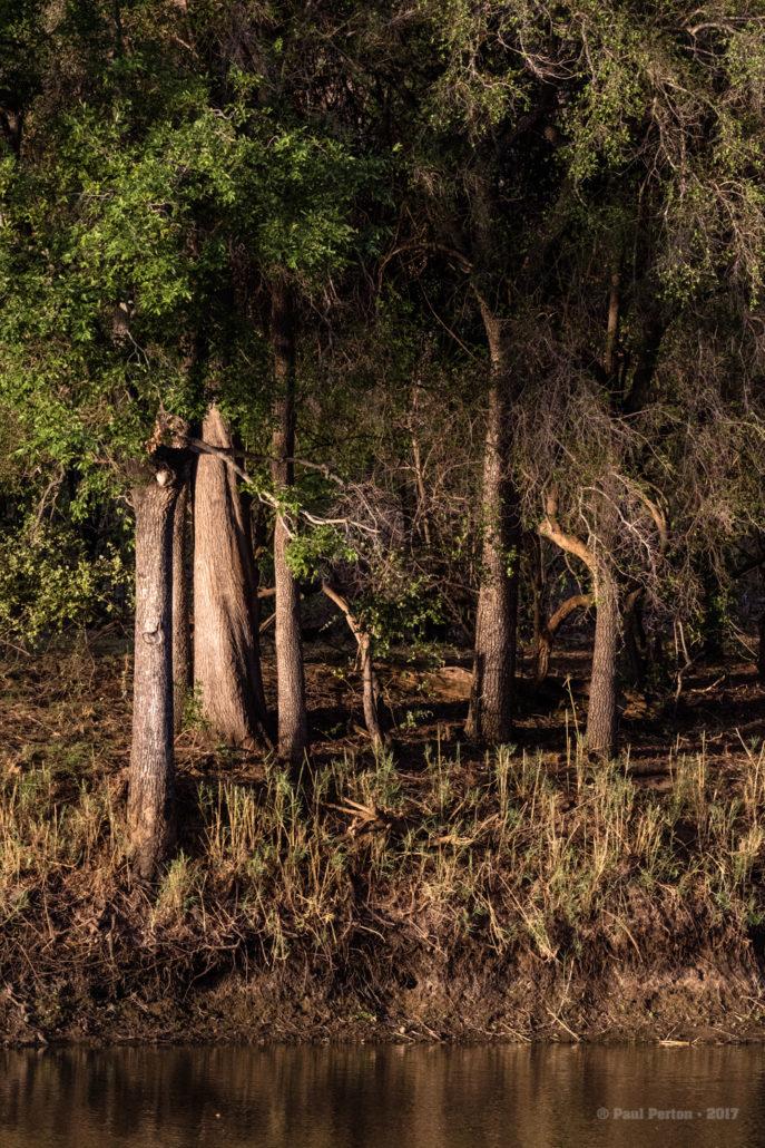 Sunset, Kruger Park