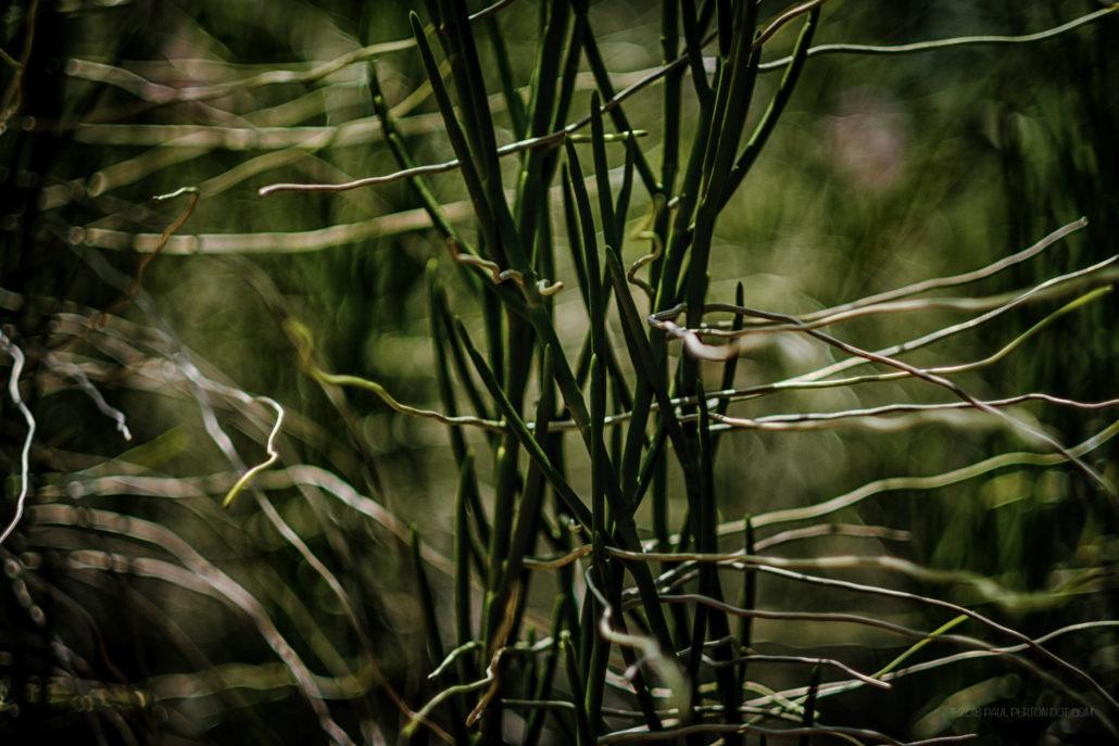 Close up, National Botanical Gardens